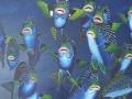 Diklipvissen 2