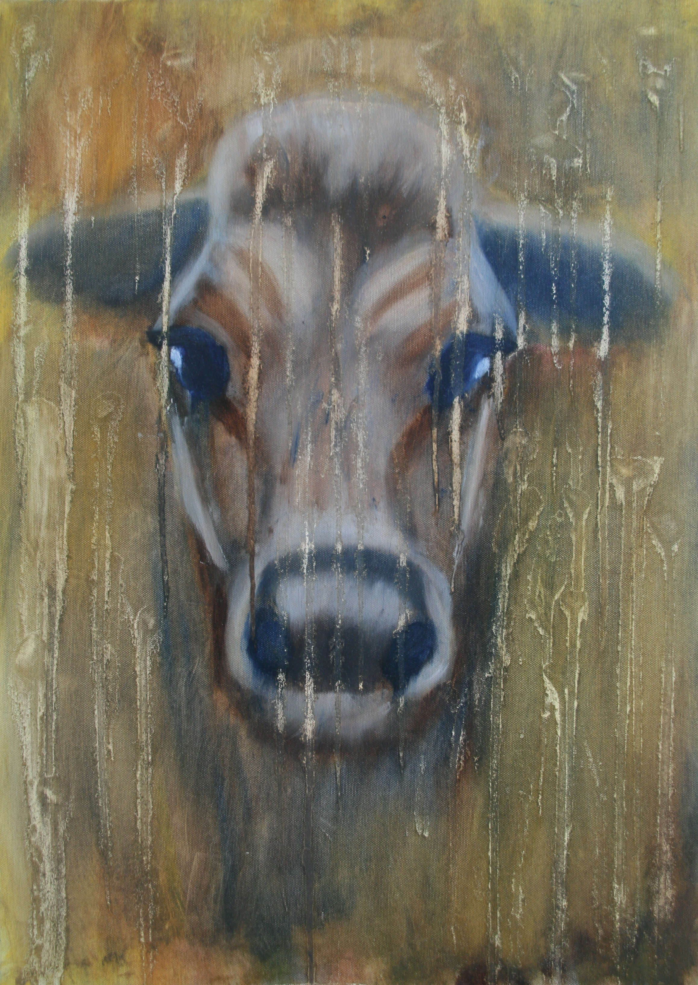 Koe in de regen